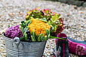 Yellow and violet cauliflowesr and hydrangea blossom in a zinc bucket