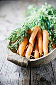 Frische Karotten mit Grün in rustikaler Holzschale