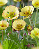 Geum Cocktail 'Tequila Sunrise'