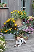 Bunte Sommerterrasse mit Stauden und Sommerblumen, Hund Zula
