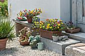 Sukkulenten Arrangement mit Portulakröschen, Hauswurz, Echeverie und Brenngeleepflanze