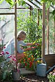 Tomaten und Kapuzinerkresse im Gewächshaus, Frau erntet