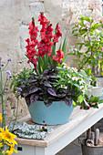 Türkise Blechschale mit Gladiolen, Punktblume und Zinnien
