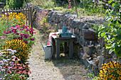 Gartenweg zwischen blühendem Sommerbeet und Trockenmauer aus Naturstein