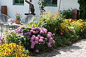 Terrassenbeet mit Sonnenhut 'Goldsturm' und Hortensie