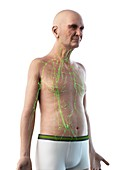 Illustration of an old man's lymphatic system