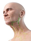Illustration of an old man's lymph nodes of the neck