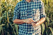 Farmer using smartphone in corn field