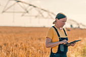 Wheat farmer using tablet in field