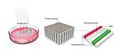 3D-bioprinting, illustration