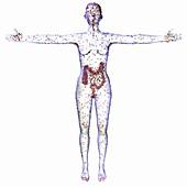 Human microbiome, conceptual image
