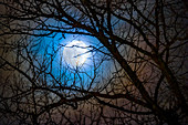 Full Moon through tree branches