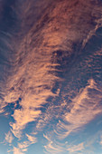 Cirrus and cirrocumulus clouds at sunset