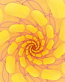 Spiral abstract illustration.