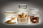 Preserved animal specimens