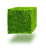 Grass cube, illustration