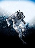 Werewolf, illustration