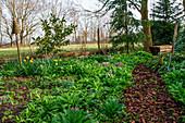 Bärlauch, Lerchensporn und Narzissen im Frühlingsgarten
