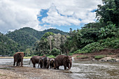 Elephants playing in the Mae-Taeng river, Thailand