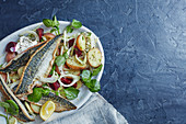 Grilled mackarel with beetroot, potatoe and fennel salad