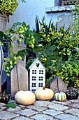 Herbstdekoration mit Kürbissen und Hopfenranke