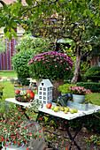 Herbstdekoration mit Chrysantheme, Torfmyrte, Fetthenne, Korb mit Kürbissen und Kastanien