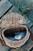 Fresh caught fish in a fishing basket