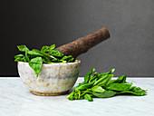 Basil, pestle and mortar