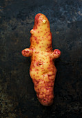 Pink Fir Apple Potato