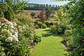 Rasenweg zwischen Beeten mit Hortensien und Rosen