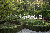 Knotengarten mit Pfauenaugen-Narzissen und japanischer Hülse als Einfassung
