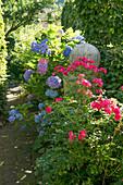 Beet mit Rosen und Hortensien am Weg, Granitsäule mit Kugel