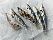 Grilled sardines on paper