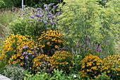 Gelb-violettes Beet mit Sonnenhut 'Goldsturm', Sommerflieder Buzz 'Violet', Duftnessel, Eisenkraut und Fenchel