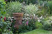 Spätsommer-Beet mit Herbstanemone, Chrysanthemen und Pfahlrohr, große Terracottavase als Deko