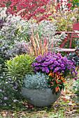Herbstlich bepflanzte Schale: Aster, Wolfsmilch 'Ascot Rainbow', Stacheldrahtpflanze, Chili 'Medusa' und japanisches Rotgras 'Red Baron'
