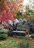 Sitzplatz im Herbstgarten mit Astern, Federborstengras und Korkleisten-Spindelstrauch
