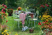 Sitzgruppe im Garten zwischen Beeten mit Dahlien, Scheinsonnenhut, Sonnenbraut und Sonnenhut, Korb mit Äpfeln und Weintrauben, Hund Zula