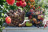 Frisch geerntete Kartoffeln, Äpfel, Weintrauben, Zwetschgen, Birne, Brombeeren in Drahtkörben