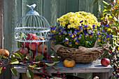 Korb mit Herbstchrysantheme und Hornveilchen, Äpfel im Vogelkäfig als Dekoidee