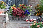Herbstlich bepflanzter Korbkasten mit Chrysantheme, Chili 'Pretty in Purple', Lampionblume, Stiefmütterchen und Hornveilchen