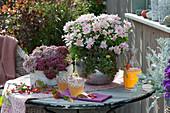 Chrysantheme 'Rico Apricot', Polster-Fetthenne 'Superstar' 'Pure Joy', Zierapfel-Zweig, Dekanter und Gläser mit Apfelsaft