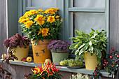 Chrysantheme Yahou 'Apricot', Salbei 'Icterina', Polster-Fetthenne, Naschzipfel 'Medusa', Chili 'Bolivian Rainbow' und Weintrauben