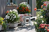 Terrasse mit Sommerblumen : Schmuckkörbchen, Kapuzinerkresse und Dahlien
