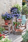 Töpfe mit Aster, Snackpaprika, blauer Mauritius, Vanilleblume, Zinnie und Chili-Pflanze im Korb