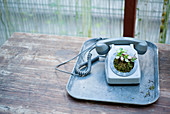 An old telephone being used as a plant pot
