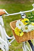 Weiße und gelbe Sommerblumen in Fahrradkorb