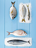 Fish still life with marble bream
