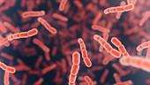 Streptococcus pneumoniae bacteria, illustration