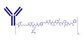 Brentuximab vedotin antibody-drug conjugate, molecular model